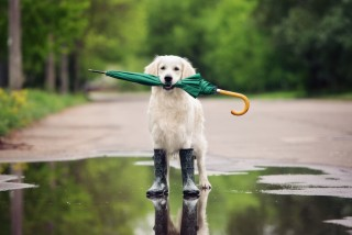 Shutterstock 420962191