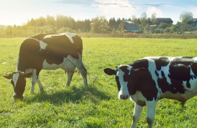Dairy3