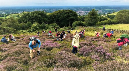 Foraging Group Picking Heather And Bilberries